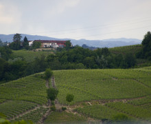 Piemonte Le Langhe Vigneti l