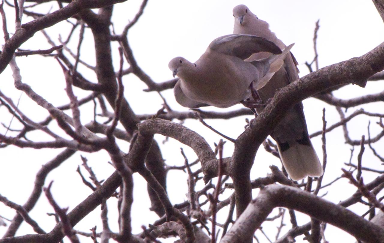 Macef Fotografa Gli Italiani A Tavola : Pasqua quest anno le colombe volano basse ilrestomancia