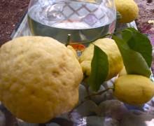 Cedro e limoni