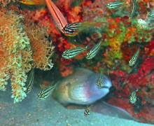 Cucciolo di murena e pesci di vetro