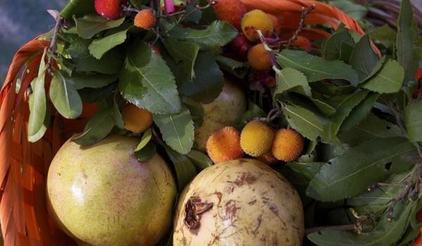 Frutta autunnale melograni e corbezzoli